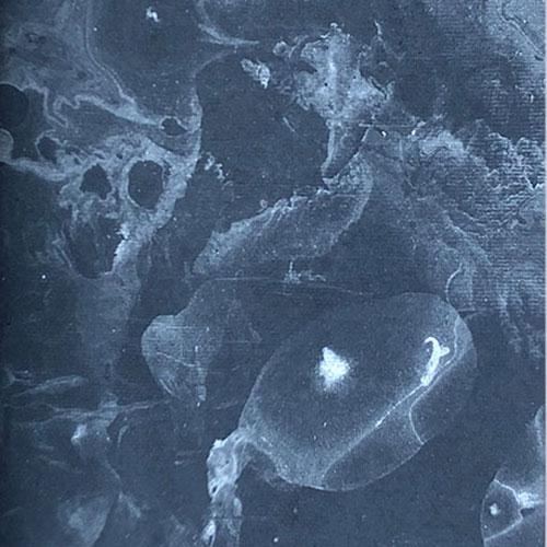 Musvedde_Dream_Silver-1-2.jpg